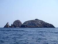カツオドリが住む鷹島