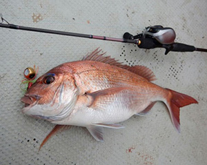 今回使用した釣り具