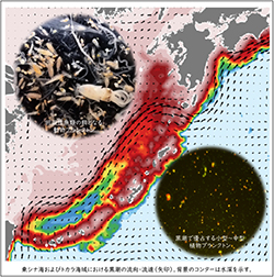 研究成果「黒潮における見えない生物生産力の仕組みを発見」