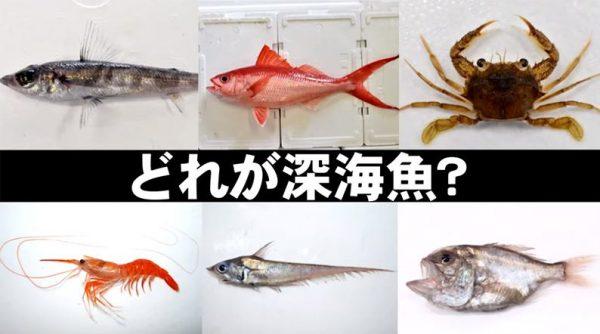 鹿児島のうんまか深海魚「かごしま深海魚研究会」紹介